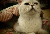 家里的小猫咪Part1