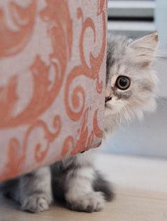 《藏猫猫》@动物摄影师刘跃进