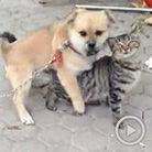 狗狗当街骑身强奸小猫咪