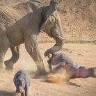 愤怒大象踢翻河马罕见场景