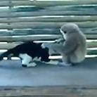 猴子暴打喵星人逼其舔下体