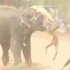 大象发狂铲死驯兽师