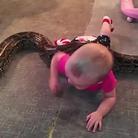 实拍男子养巨蟒看护幼女